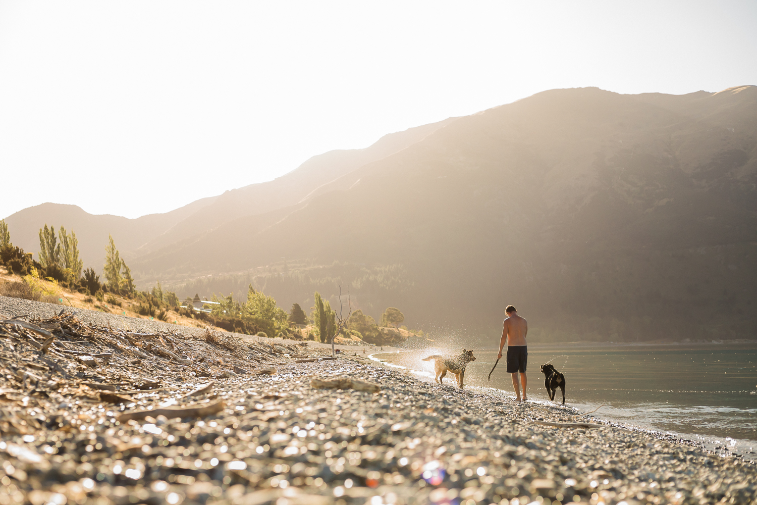 Lake Hawea Golden Hour Joram and dogs Kate Alexandra Photography
